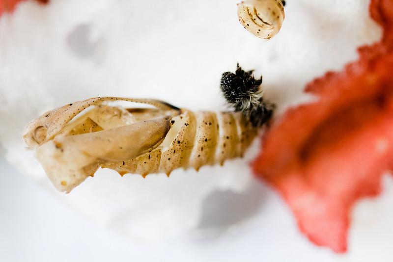 061512Butterflies-3