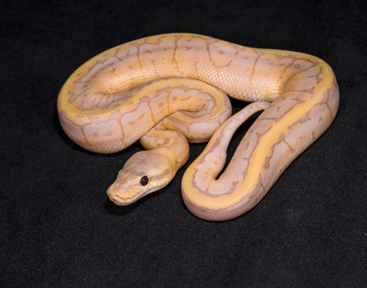 #1738, Male Banana Pastel Pinstripe, $225
