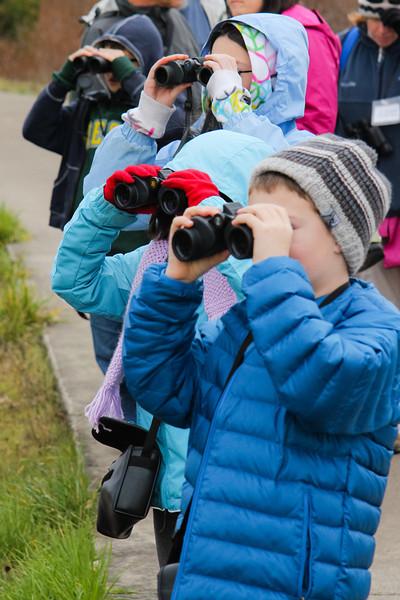 Birdwatching on the wetlands tour.