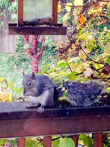 111014_Squirrel-8