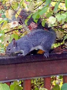 111014_Squirrel-7
