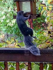 111014_Squirrel-6