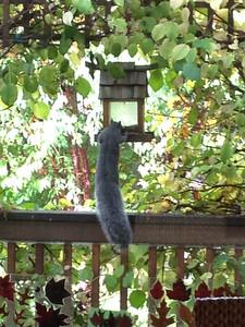 111014_Squirrel-4
