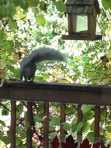 111014_Squirrel-5