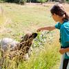 080314_Sheep-11
