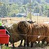 080314_Sheep-23