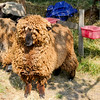 080314_Sheep-18