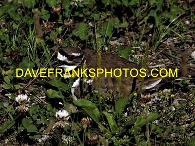 JUL 2 2021 DAVE FRANKS PHOTOS (286)