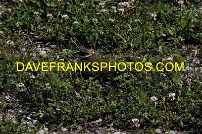 JUL 2 2021 DAVE FRANKS PHOTOS (72)