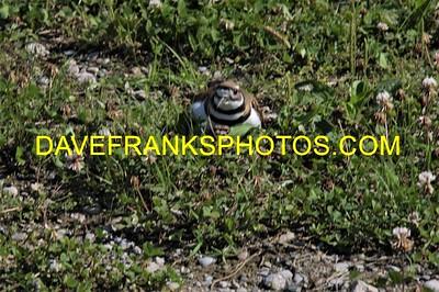 JUL 2 2021 DAVE FRANKS PHOTOS (283)