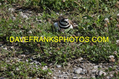JUL 2 2021 DAVE FRANKS PHOTOS (284)
