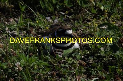 JUL 2 2021 DAVE FRANKS PHOTOS (285)