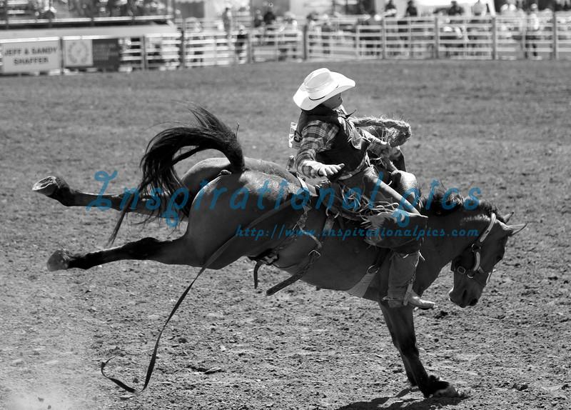 Saddleback Bronc Riding California Rodeo
