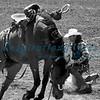 Saddleback Bronc Rider California Rodeo