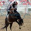 Bronc Riding California Rodeo