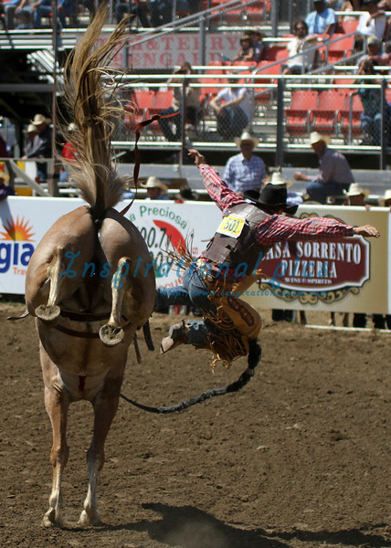 Bronc Rider California Rodeo