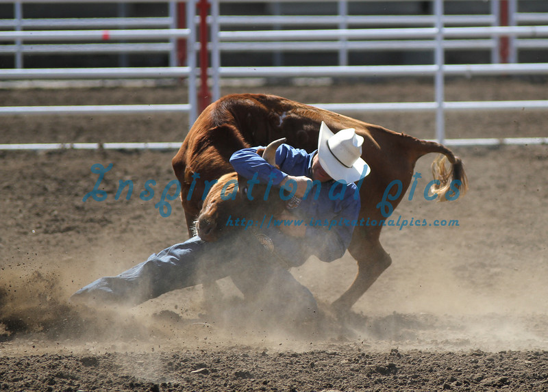 Steer Wrestler California Rodeo