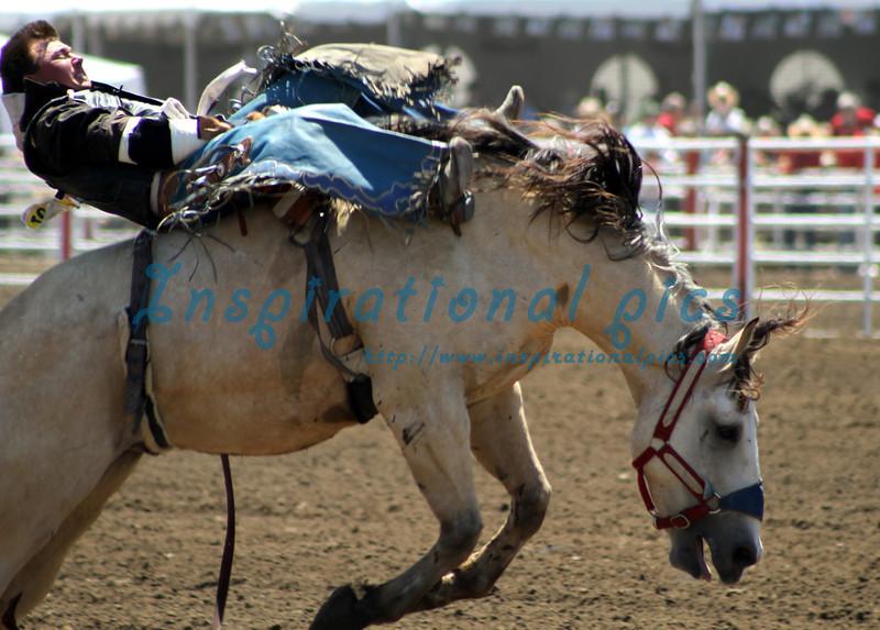 Bareback Bronc Riding  California Rodeo