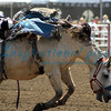 Bareback Bronc Riding  California Rodeo