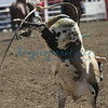 California Rodeo Bull