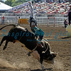 Bull Rider California Rodeo