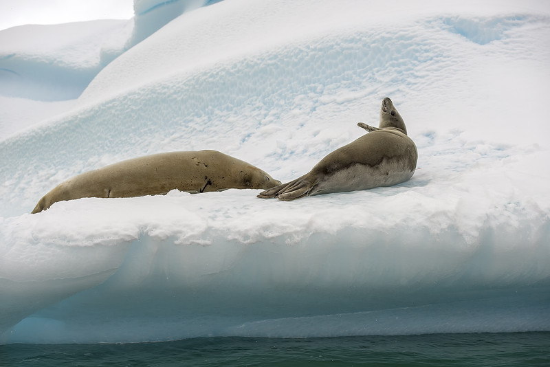 Taking a Break, Antarctica