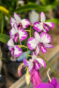 Athens_Botanical Gardens_4075