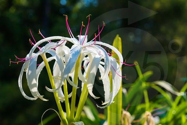 Athens_Botanical Gardens_4220