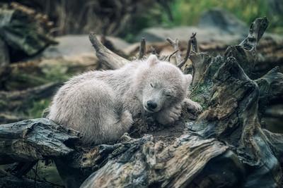 Beary cozy