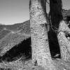 Pacific Crest Trail off McKenzie Pass