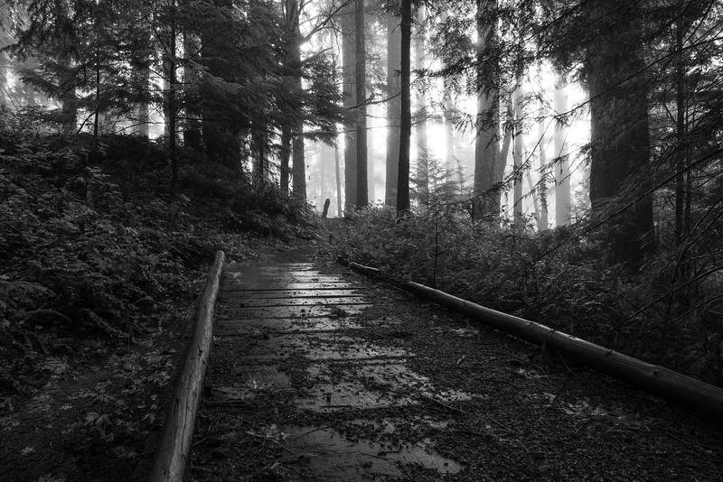 Trestle Falls Trail