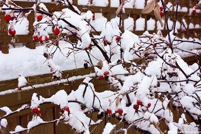Backyard winter 2011