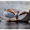 Pelican property dispute.