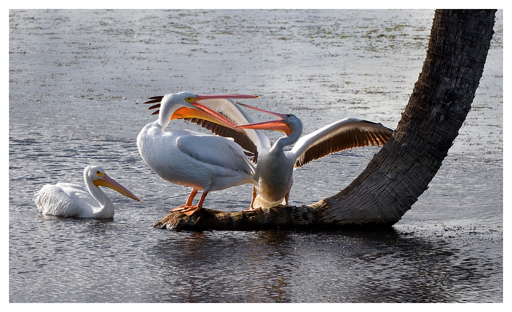 Pelican property dispute.