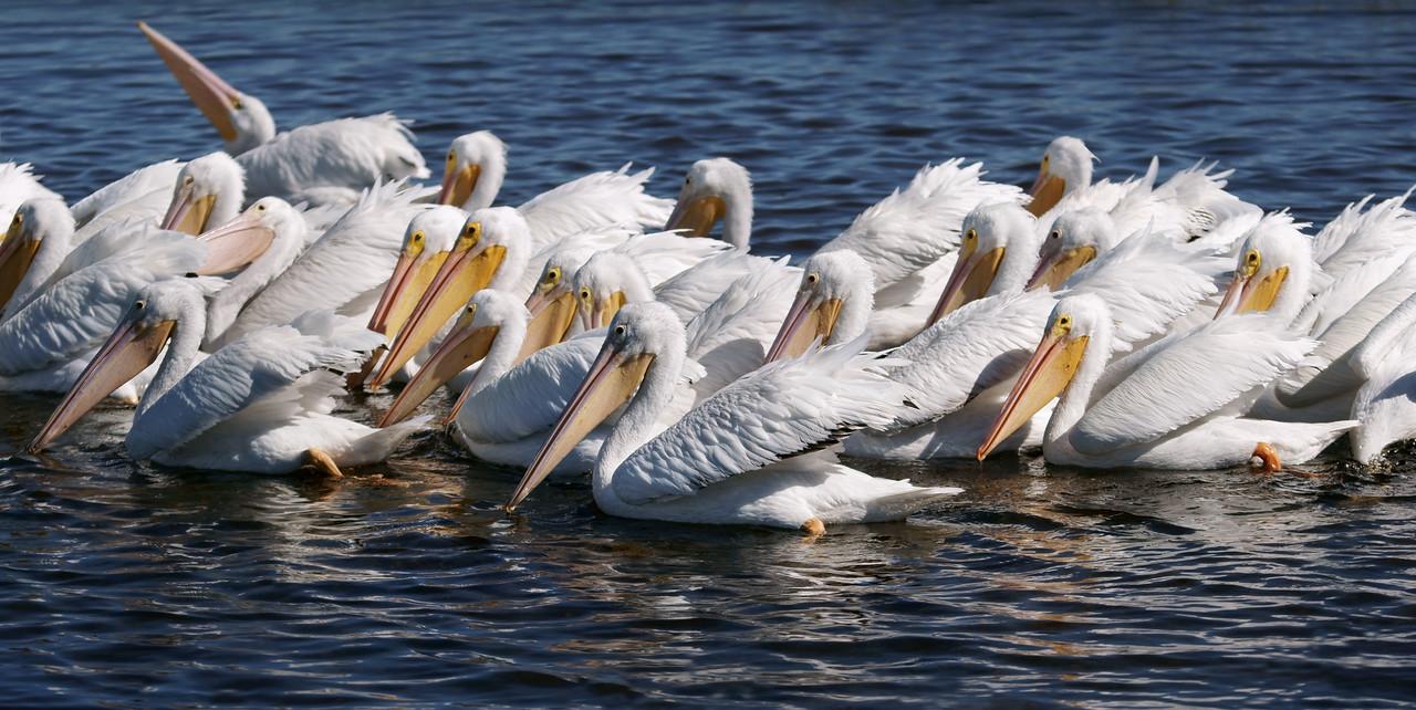 Nineteen swans o' the swamp.