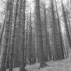 Woods at Blea Tarn