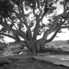 Tree In The Desert<br /> best print size - 8x12 or 12x18