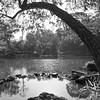 Eno River<br /> best print size - all
