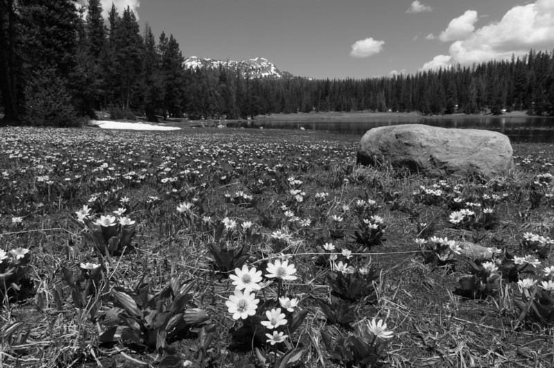Wasatch National Forest, Utah.<br /> best print size - 8x12 or 12x18
