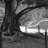 Duke Gardens. Dawn Redwood before they trimmed off the lower branches.<br /> best print size - 8x12 or 12x18