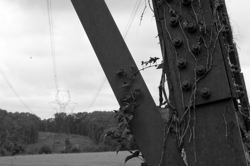 Vines growing on a high voltage power line tower, Falls Lake<br /> best print size - 8x12 or 12x18