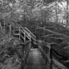 Bridge and stairs along the Falls Lake Trail, also part of the Mountains to Sea Trail.<br /> best print size - 8x12 or 12x18