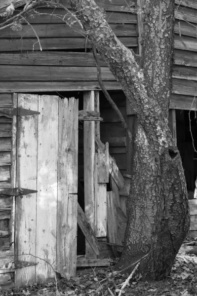 Old barn door. This was taken in the ruins of an old farm along the Fall Lake trail. Also part of the Mountains To Sea trail.<br /> best print size - 8x12 or 12x18