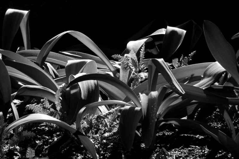 Green, In B&W - Duke Gardens.<br /> best print size - 8x12 or 12x18