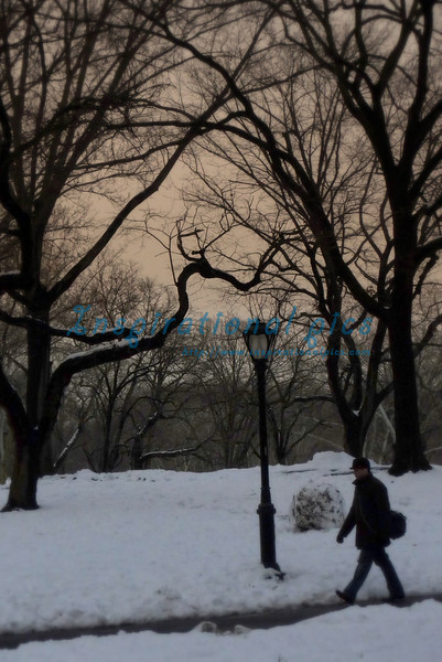 Winter NYC Central Park