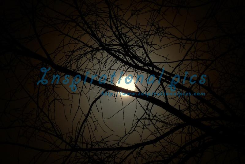 The Night Moon NYC