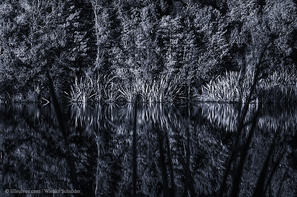 Reflections in Lake Matheson