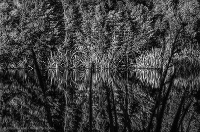 Reflections in Lake Mathewson