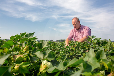 Cotton Farm-0092