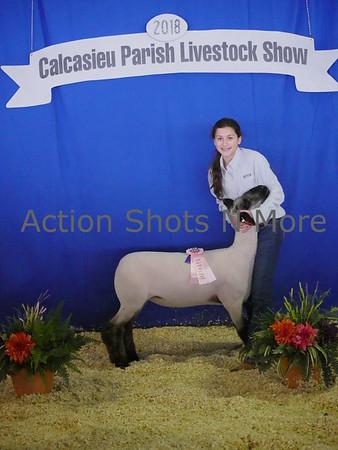 Calcasieu 4H Livestock Show, Sheep, Cattle & Chickens, Friday, 1/19/18